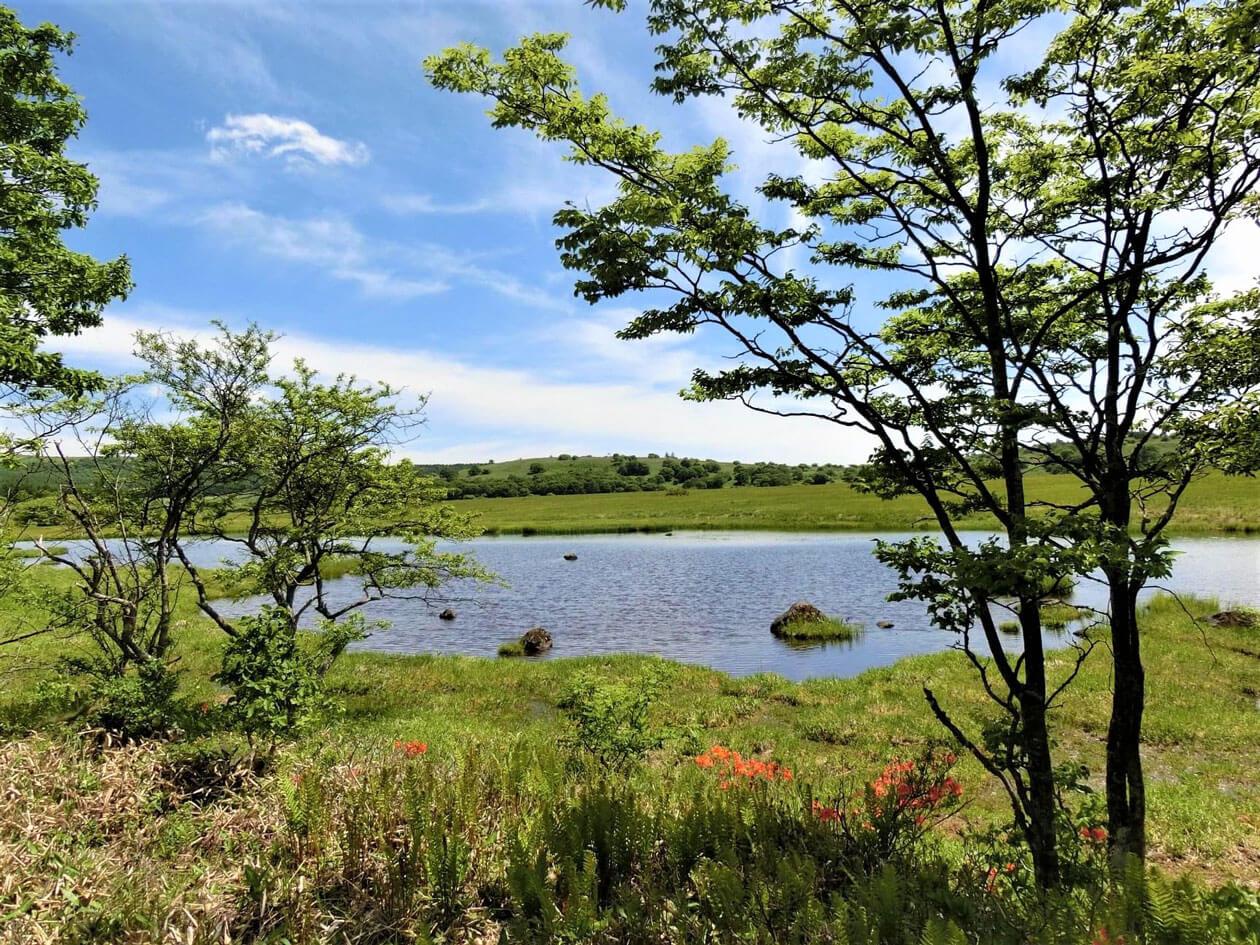 lunchpack2020summer-春の風景(鎌が池)