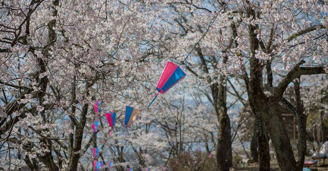 ポロンサンポ   桜をみにいく